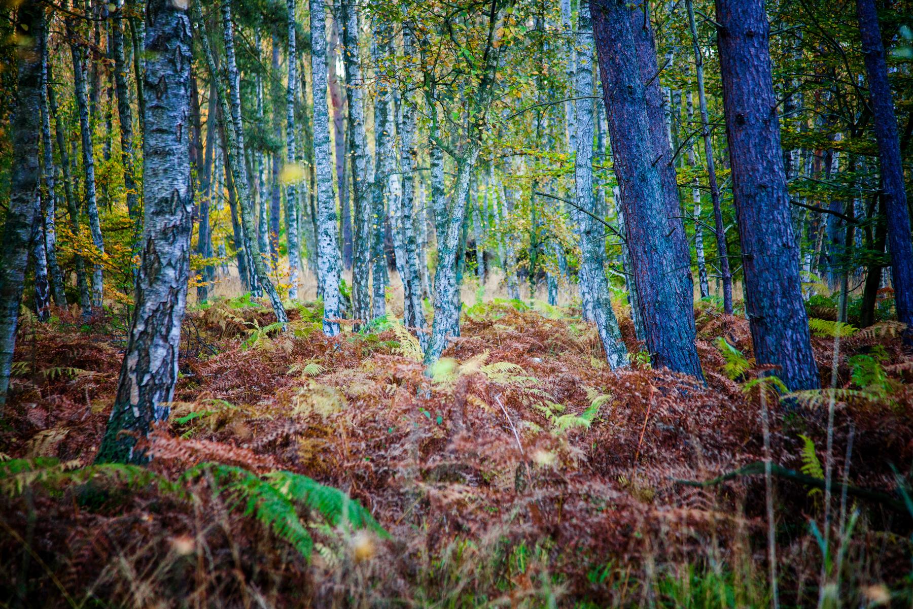 Bilder vom Wald